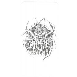 Deathwish Clear Spider sticker